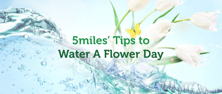 5miles' Tips to Water A Flower Day