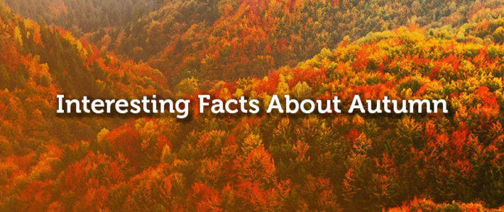 Interesting Facts About Autumn – 5miles Blog